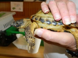 Moshi - the tortoise